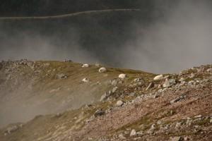 Moutons suspendus